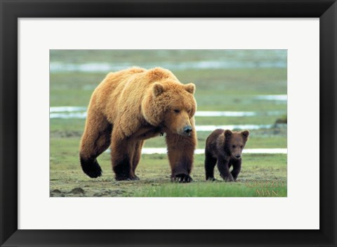 Framed Grizzly Man - couple of bears Print