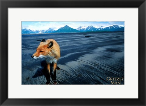Framed Grizzly Man - fox Print
