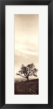 Framed Sentinel Oak Tree Print