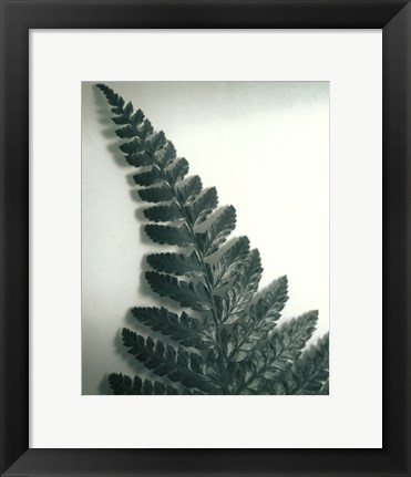 Framed Fern Leaf I Print