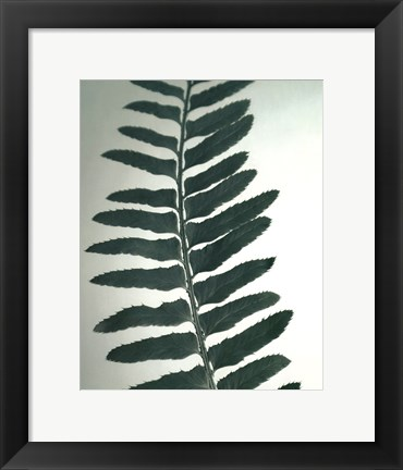 Framed Fern Detail I Print