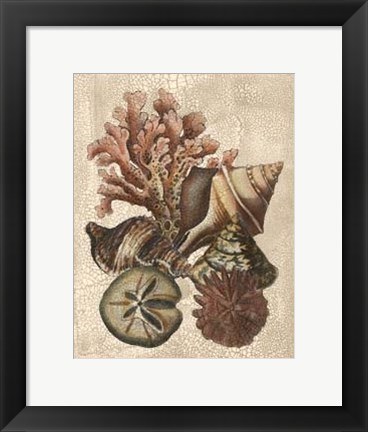 Framed Crackled Shell and Coral Collection on Cream I Print