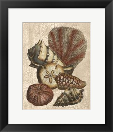 Framed Crackled Shell and Coral Collection on Cream II Print