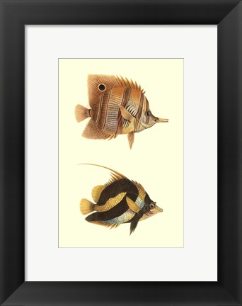 Framed Antique Tropical Fish II Print