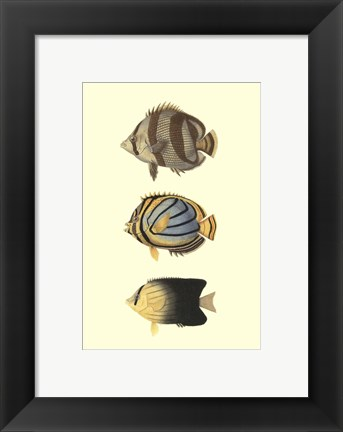 Framed Antique Tropical Fish IV Print
