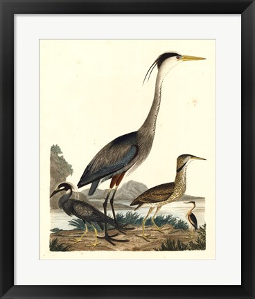 Framed Heron Family I Print
