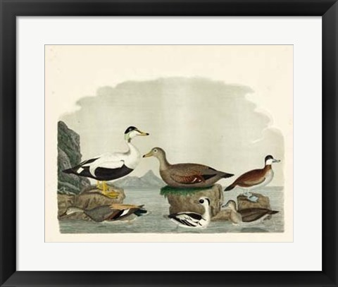 Framed Duck Family I Print