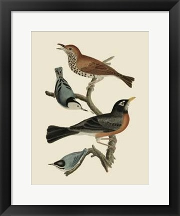 Framed Bird Family I Print