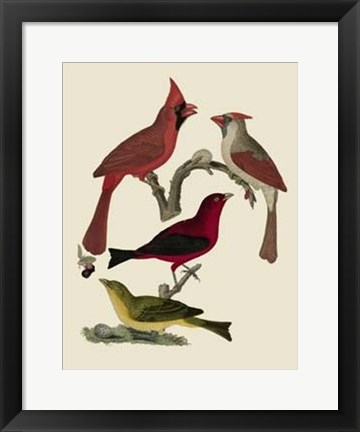 Framed Bird Family IV Print