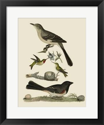 Framed Bird Family V Print