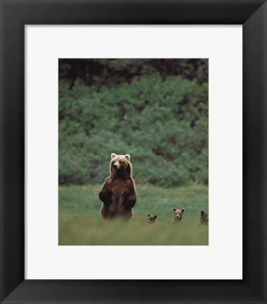 Framed Grizzlies Print