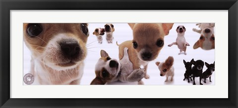 Framed Dogs - Chihuahua Print