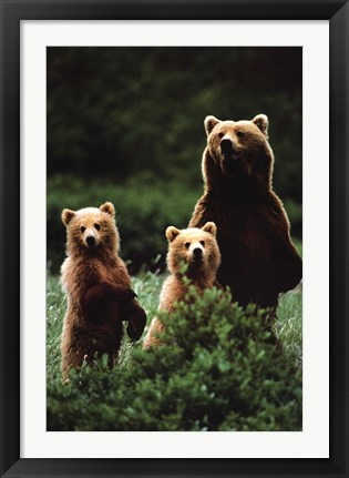 Framed Bears Print