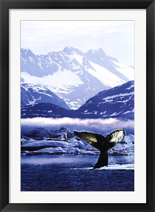 Framed Humpback Whale Tail in Arctic Print