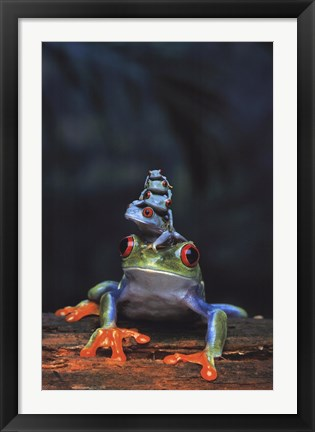 Framed Frogs photo Print