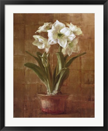 Framed White Amaryllis on Bronze Print
