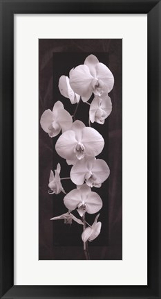 Framed Orchid Opulence II Print
