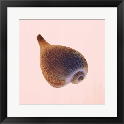 Framed Fig Shell Print
