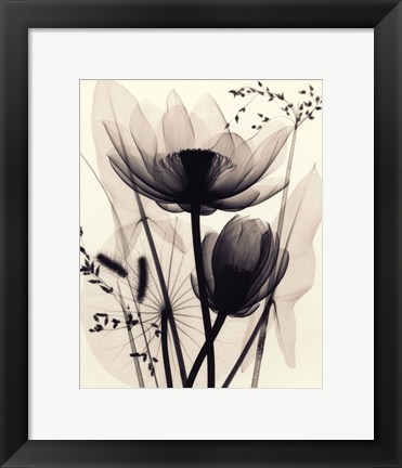 Framed Lotus and Grasses Print