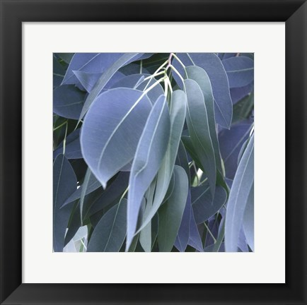 Framed Eucalyptus Leaves Print