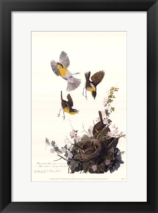 Framed Yellow-Breasted Chat Print