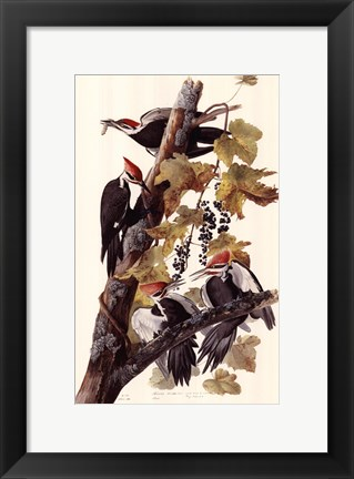 Framed Pileated Woodpeckers Print