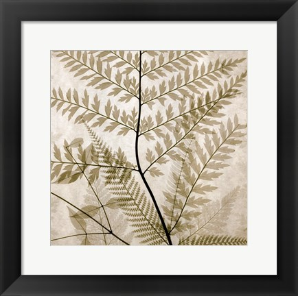 Framed Ferns II Print