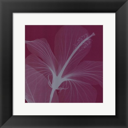 Framed Hibiscus/Silver (Sm) Print