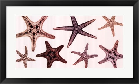 Framed Starfish Collection (Sepia) Print