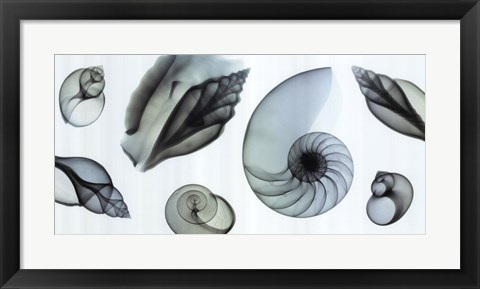 Framed Shell Collection (Teal) Print