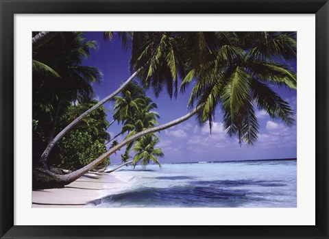 Framed Palm Trees Leaning Print