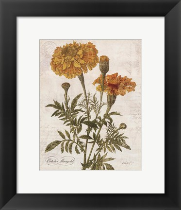 Framed October Marigold Print