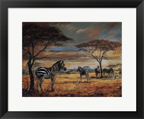 Framed Zebras On The Plains Print
