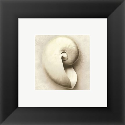 Framed Sea Shapes III - Special Print