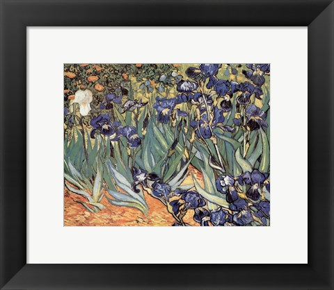 Framed Irises in the Garden, Saint-Remy, c.1889 Print