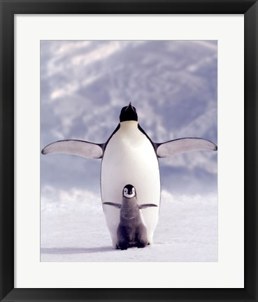 Framed Penguin and Chick Print