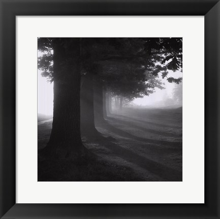 Framed Misty Trees Print