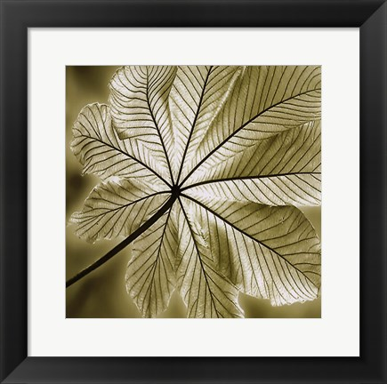 Framed Autumn Leaf II Print