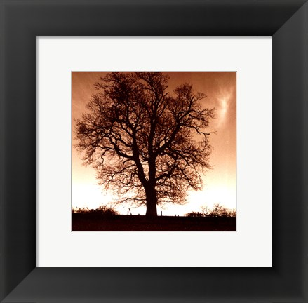 Framed Winter Tree No. 1 Print