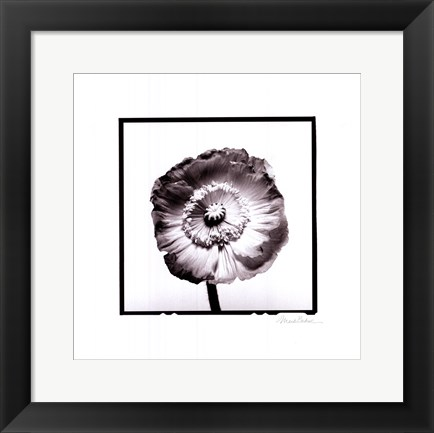 Framed Translucent Poppy I Print