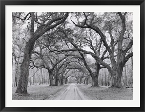 Framed Oak Arches Print