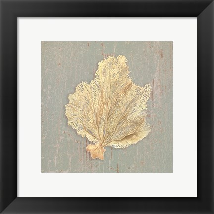 Framed Sea Fan Print