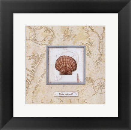 Framed Sea Treasure II - mini Print