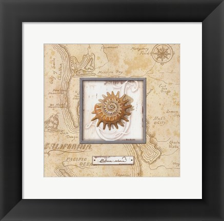 Framed Sea Treasure III - mini Print