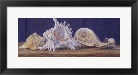 Framed Shells I Print