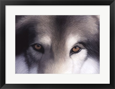 Framed Eyes of the Hunter: Gray Wolf Print