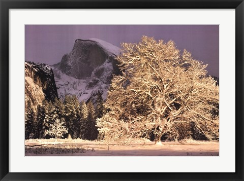 Framed Half Dome and Elm Print
