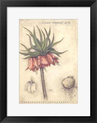 Framed Crown Imperial Lily Print