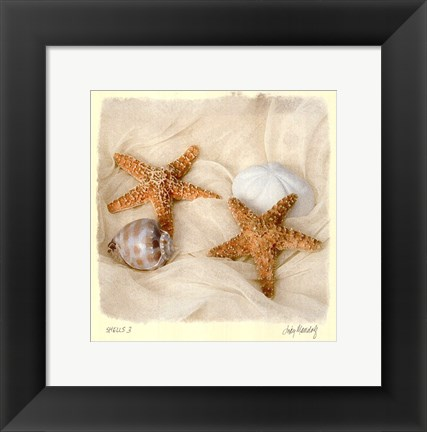 Framed Shells III Print