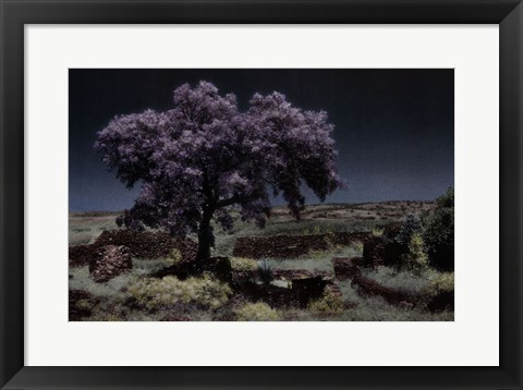 Framed Wisteria Tree Print